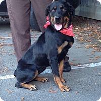 Adopt A Pet :: Saki - Tracy, CA