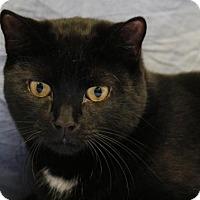Adopt A Pet :: Tig - Norwich, NY