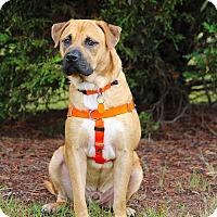 Adopt A Pet :: Cash - Pinehurst, NC