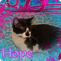 Adopt A Pet :: Hope - Brainardsville, NY