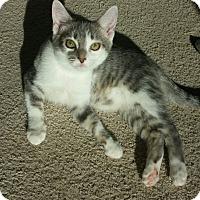 Adopt A Pet :: Captain - Fairborn, OH