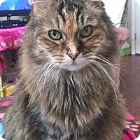 Adopt A Pet :: Peru - Davis, CA