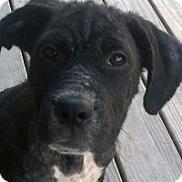 Adopt A Pet :: Nadia - Barnegat Light, NJ