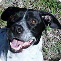 Adopt A Pet :: Freckles - Fort Lauderdale, FL