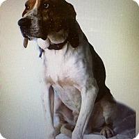 Adopt A Pet :: Finn - Hazard, KY