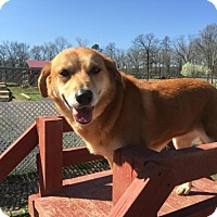 Adopt A Pet :: Kate - Boulder, CO