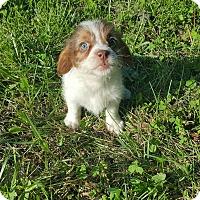 Adopt A Pet :: Beast~adopted! - Glastonbury, CT