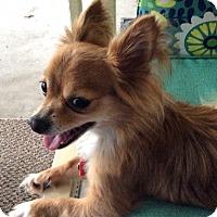 Adopt A Pet :: Prince - Jacksonville, FL
