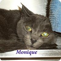 Adopt A Pet :: Monique - El Cajon, CA