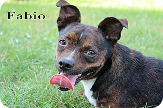 Terrier (Unknown Type, Small) Mix Dog for adoption in Texarkana, Arkansas - Fabio