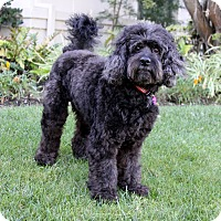 Adopt A Pet :: LEWIS - Newport Beach, CA