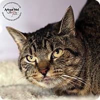 Adopt A Pet :: Finn - Lyons, NY