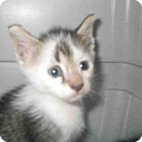 Adopt A Pet :: SKIPPER - Jacksonville, FL