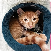 Adopt A Pet :: Roadie - Washingtonville, NY