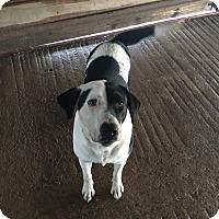 Adopt A Pet :: Nellie - Cuero, TX
