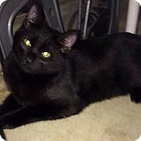 Adopt A Pet :: Blake - San Ysidro, CA