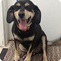 Adopt A Pet :: Carl - Lancaster, VA