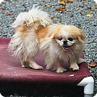 Adopt A Pet :: Ruby - Hop Bottom, PA