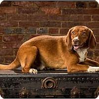 Adopt A Pet :: Redman - Owensboro, KY