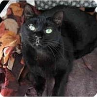 Adopt A Pet :: Norma - Xenia, OH