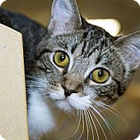Adopt A Pet :: Double Jinx - Irvine, CA