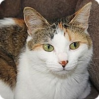 Adopt A Pet :: Cricket - Kalamazoo, MI