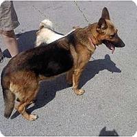 Adopt A Pet :: Nala - Albany, NY