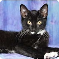 Adopt A Pet :: Selim - Oxford, NY