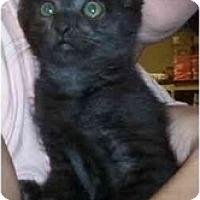 Adopt A Pet :: Lydia - Reston, VA