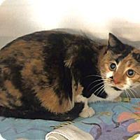Adopt A Pet :: Patches - Edmonton, AB