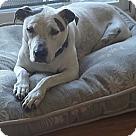 Adopt A Pet :: Sally Sweet Pea