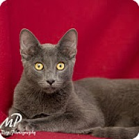 Adopt A Pet :: Robert - Fountain Hills, AZ