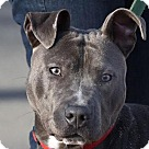 Adopt A Pet :: FREDDY