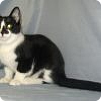Adopt A Pet :: Seymour - Powell, OH