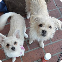 Adopt A Pet :: Elsa & Kristoff - Los Angeles, CA