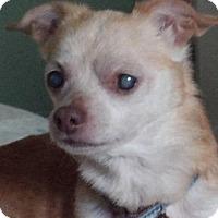 Adopt A Pet :: Jaxson - Grand Rapids, MI