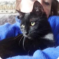 Adopt A Pet :: BRENDALIE LOVE BUG KITTY - New York, NY
