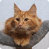 Adopt A Pet :: Henry - Chippewa Falls, WI