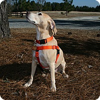 Adopt A Pet :: Bella - Pinehurst, NC