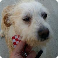 Adopt A Pet :: JACK - Gustine, CA
