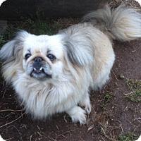 Adopt A Pet :: Sophie Peeks - Barnesville, GA