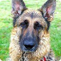Adopt A Pet :: Chloe - Wayland, MA