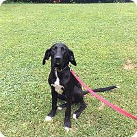Adopt A Pet :: Dustin - New Oxford, PA