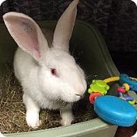 Adopt A Pet :: Sherman - Woburn, MA