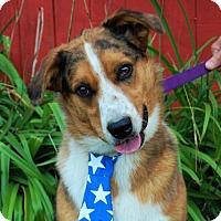 Adopt A Pet :: Dash - Wedgefield, SC