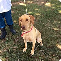Adopt A Pet :: Ryder #2 - Midlothian, VA
