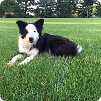 Adopt A Pet :: Lily - Midwest (WI, IL, MN), WI
