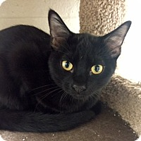 Adopt A Pet :: Vincent - San Leon, TX