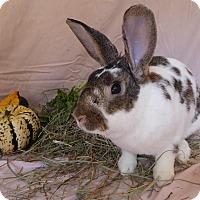Adopt A Pet :: Napoleon - Alexandria, VA