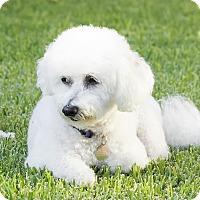 Adopt A Pet :: Sadie - Placentia, CA